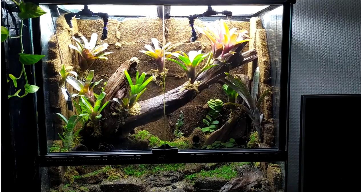 Comment réaliser un terrarium tropical pour dendrobates? Découvrez la méthode BTS présentée par Raphaël