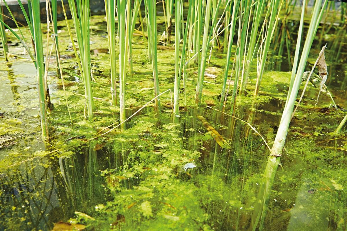 Comment avoir une eau claire dans un étang ?