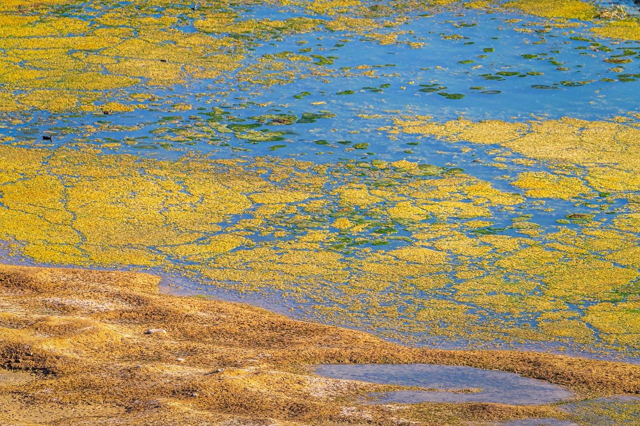 Comment supprimer les algues dans un étang ou bassin ?